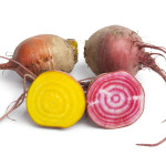 Fresh raw Chioggia beets and yellow beets